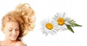 χαμομήλι στα μαλλιά